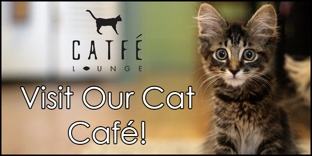 Visit our Cat Cafe in Ferndale Michigan