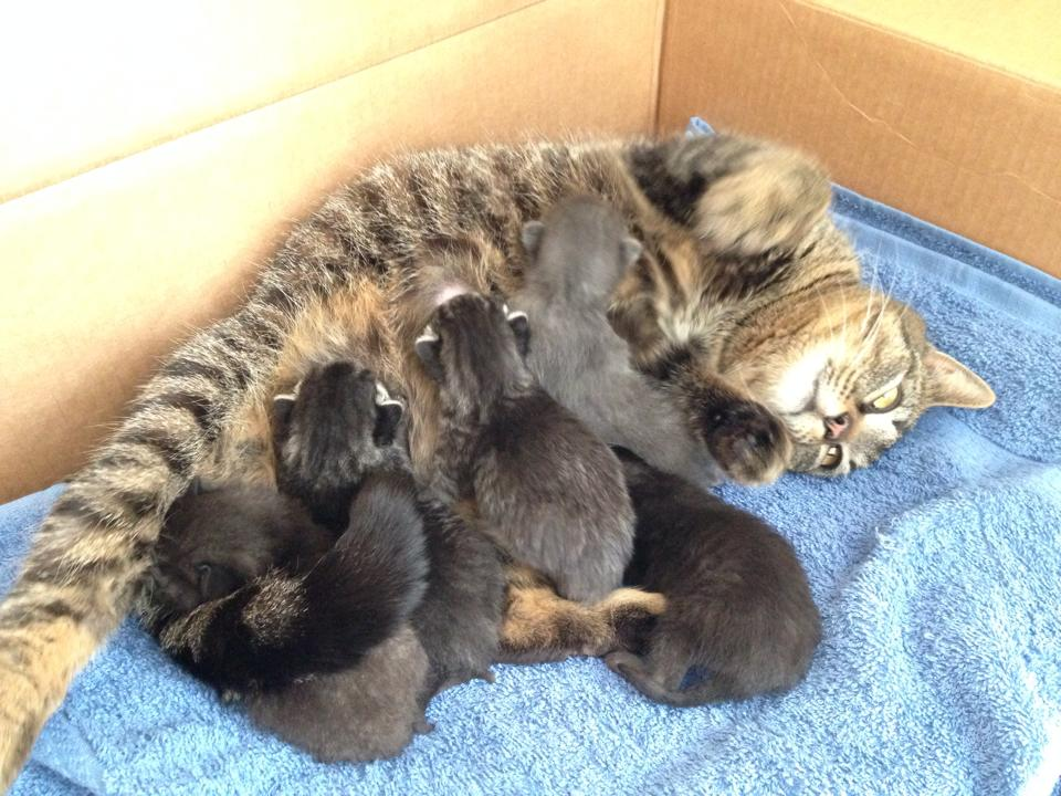 Momma Cat Nursing Her Kittens